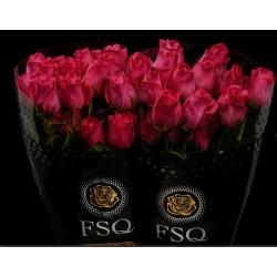 Rose fushia