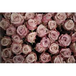 Rose mauve pastel