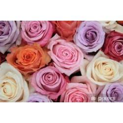 Rose mixte pastel