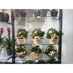 montage de plante